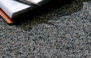 3carpete